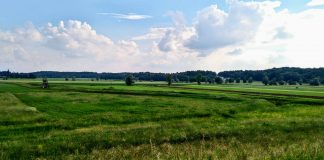 Green and uncontaminated Hungarian fields