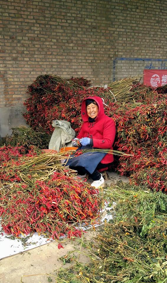 Red hot chili pepper in China