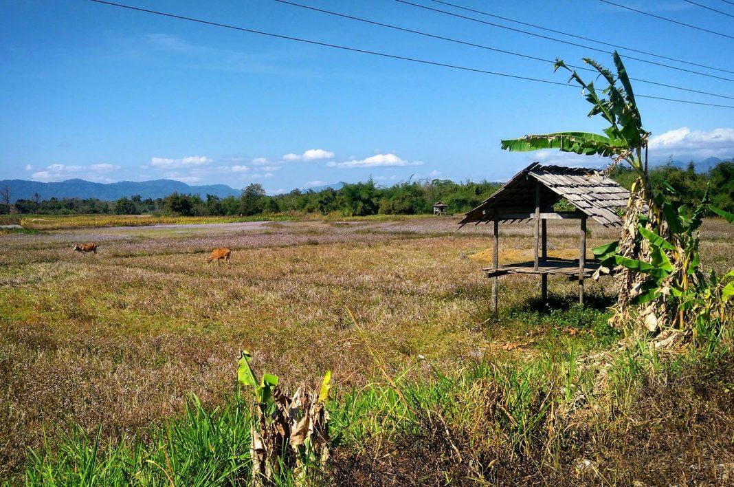 Portrati of the farm in the Nakai NamTheun National Park